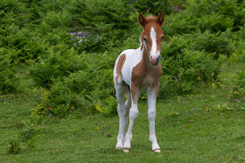 Squee Alert 10 Adorable Baby Horses Animal Hearted Animal Hearted Apparel