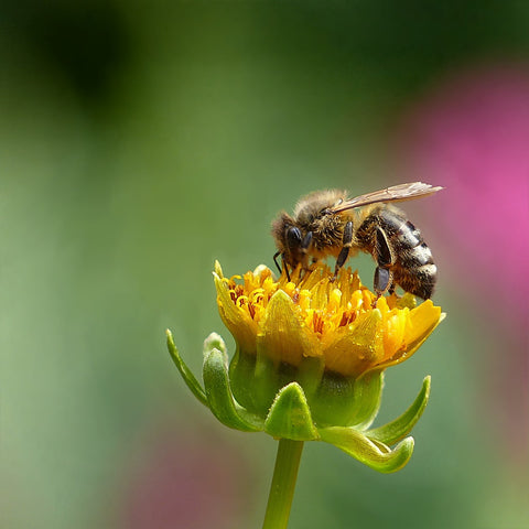 How to Help Save the Bees…In Your Own Back Yard!