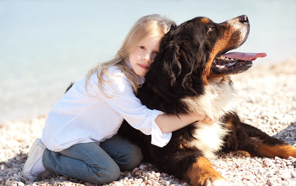 Kid with Bernese Mountain dog mix