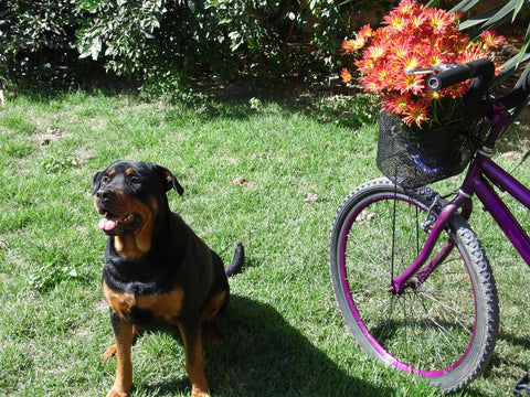 how to bike with a dog safely