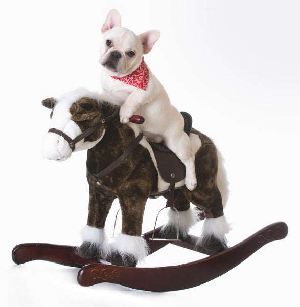 bulldog on rocking horse