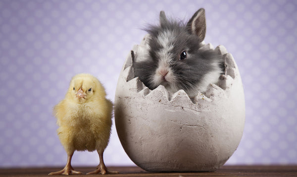 Can Bunnies and Chickens Live Together