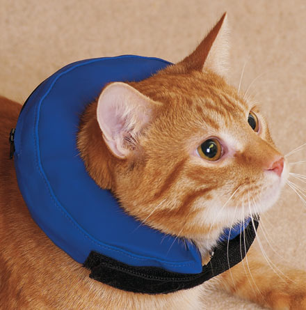 4 Comfortable Cat And Dog Cone Alternatives Animal