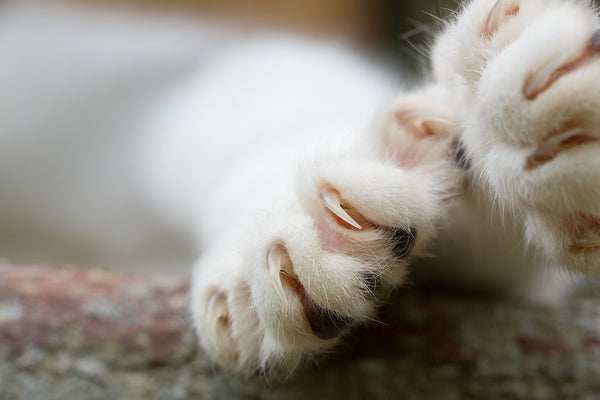 facts about declawing cats