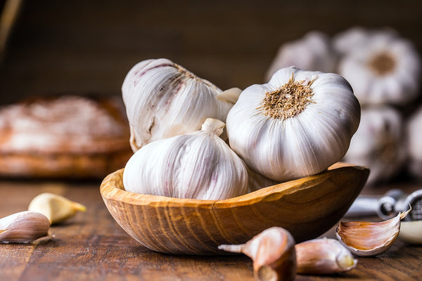 Garlic Harmful For Dogs