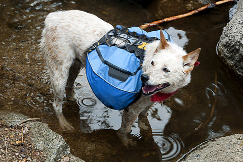 Hiking with Your Dog backpacking