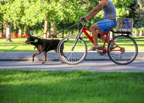 How to bike safely with your dog