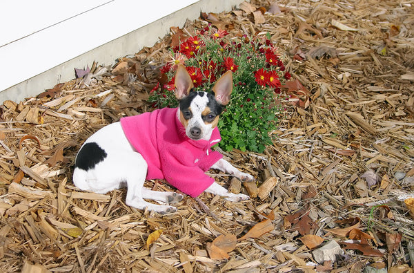 Is mulch bad for dogs