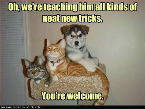 Image result for cat and dog meme