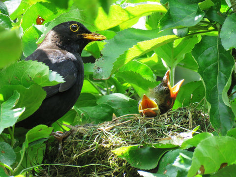 How to Put Out Nesting Materials for Backyard Birds