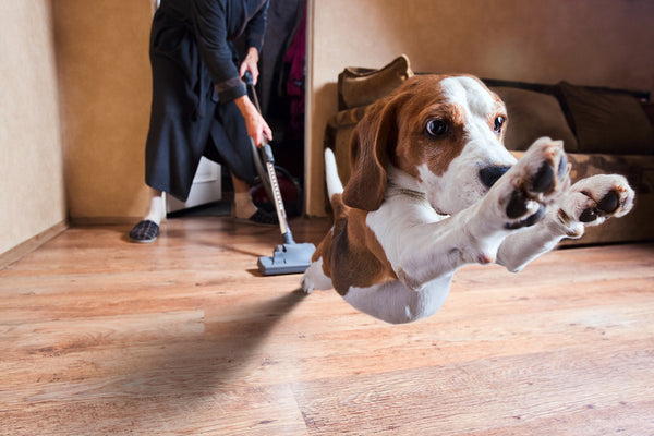 6 DIY Pet Friendly Cleaning Product Alternatives