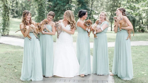 Puppies Replace Flowers in Best Wedding Photo Shoot Ever!