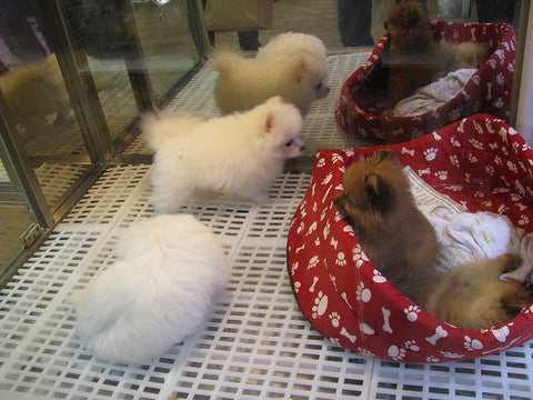 Ban On Pet Store Puppies Spreads Across Us Animal Hearted Apparel