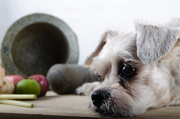 spices harmful for dogs
