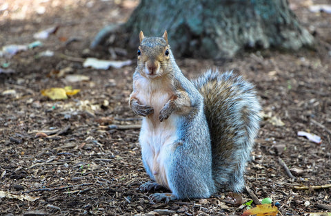 Humane Ways To Deal With Squirrels In Your House And Yard
