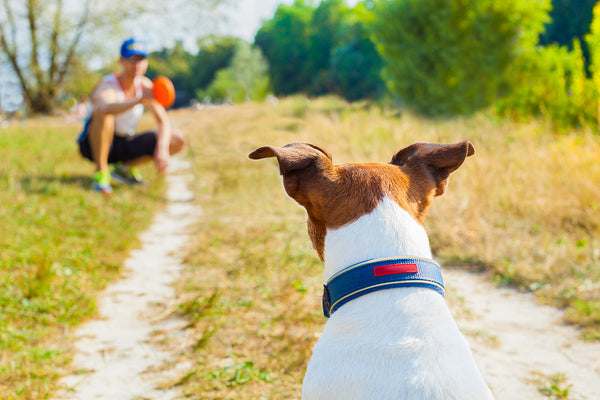 top dog friendly cities