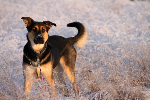 Help Your Pets Stay Warm During the Cold Winter Months