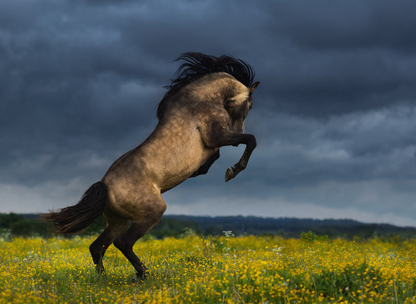 what you need to know about andalusian horse temperament animal