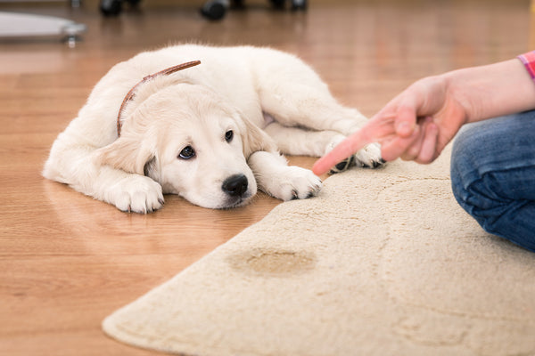 Best Pet Carpet Cleaner