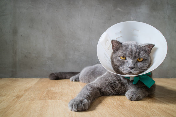Dog and Cat Cone Alternatives