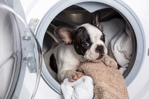 are fabric softener sheets toxic for dogs