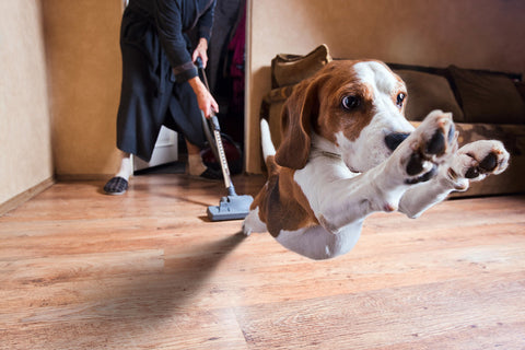 vacuum fear in dogs