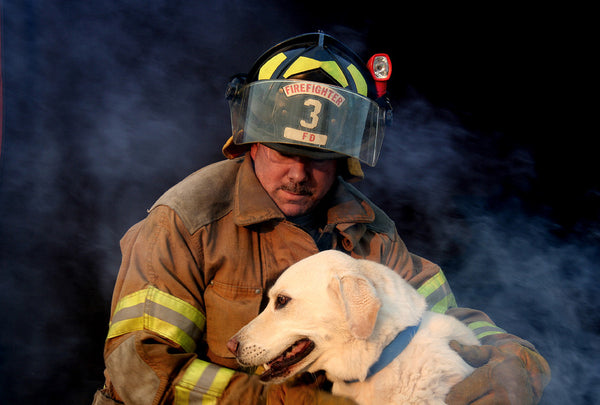 5 Heartwarming Videos Of Firefighters Saving Dogs And Cats