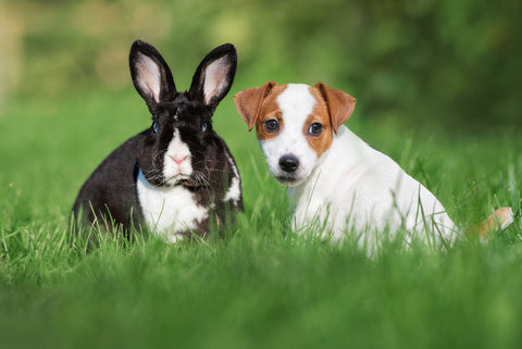 getting a bunny with a dog