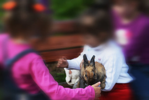 getting a bunny for kids