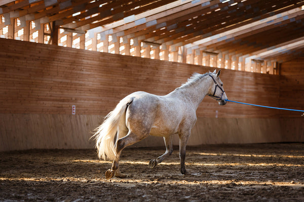 how big should a horse round pen be-diameter