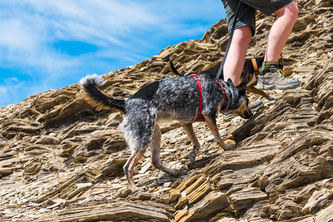 Leash when Hiking with Your Dog