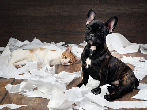 owning a pet that damages properties