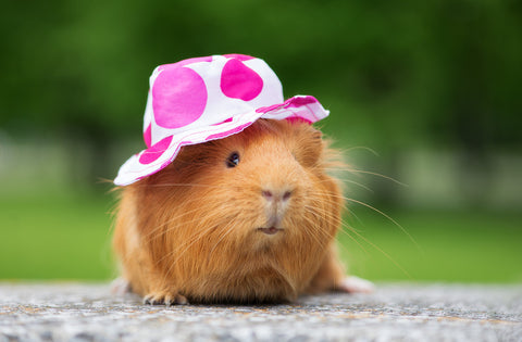 owning a pet with pink hat