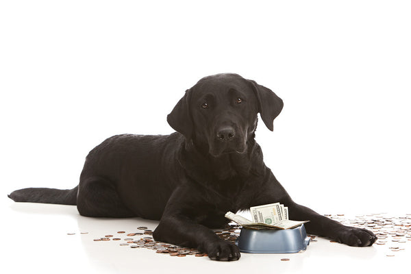are pennies toxic to dogs
