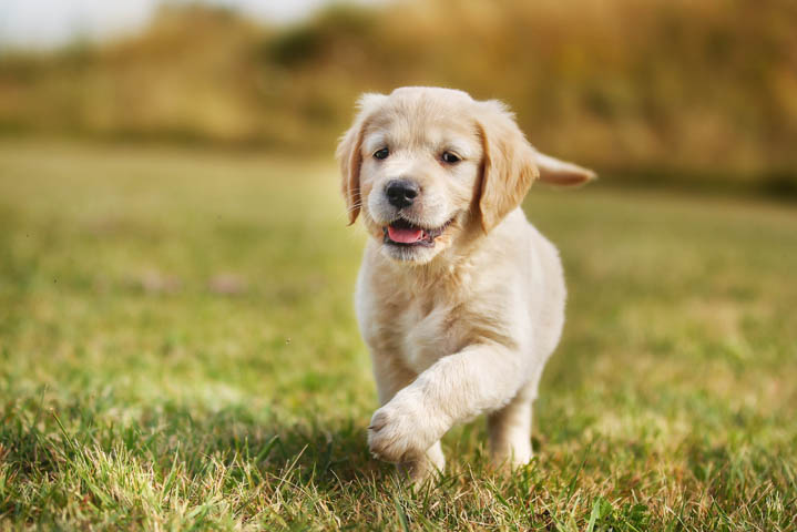 A cute puppy running