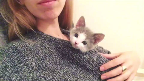 Adorable Video:  Tiny Rescued Kitten Grows Up