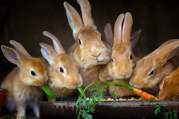 What Fruits Can Rabbits Eat
