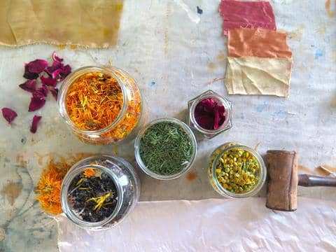 Naturally dye four hanks of wool with wild foraged plants