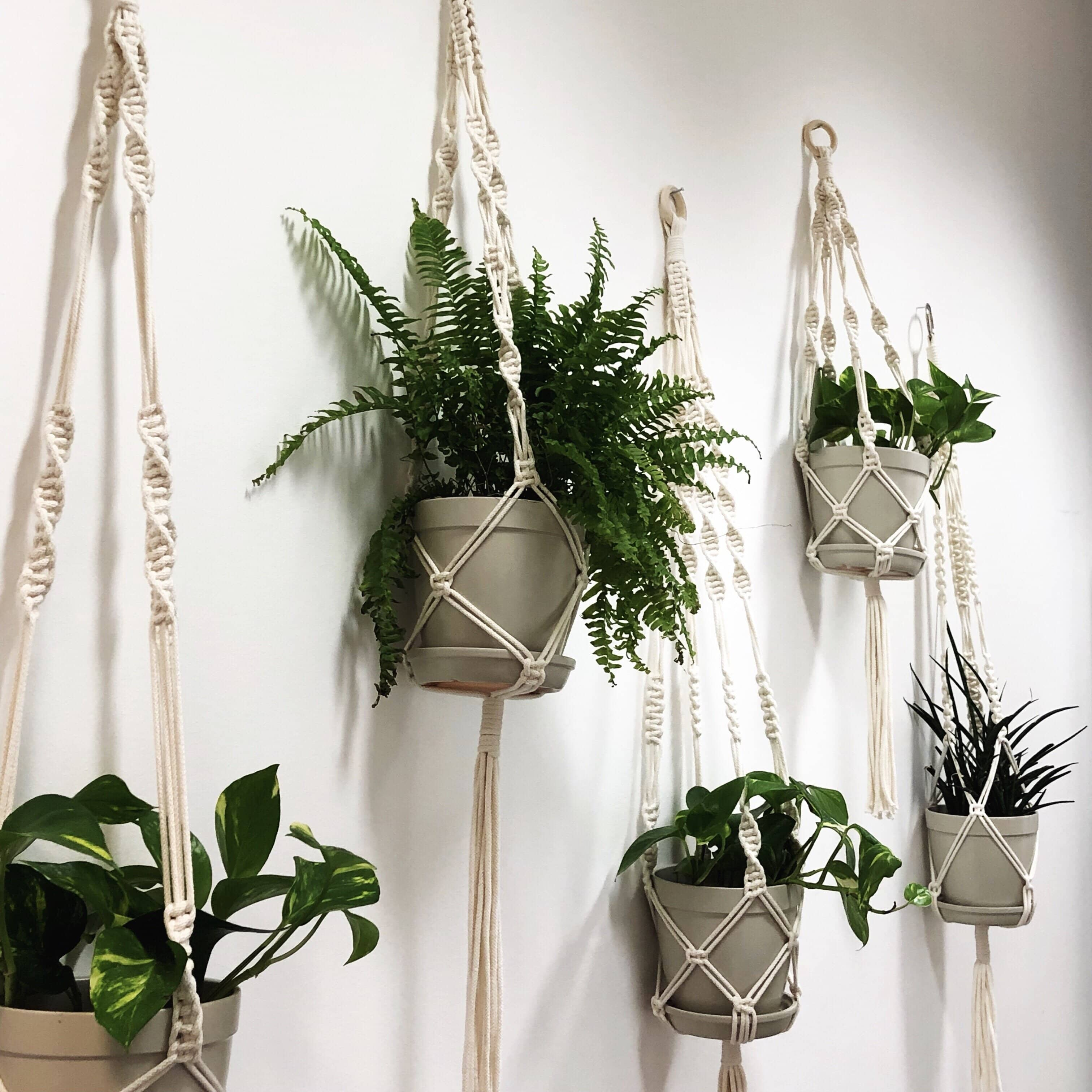 Learn To Make A Stunning Macrame Plant Hanger London Craft Club