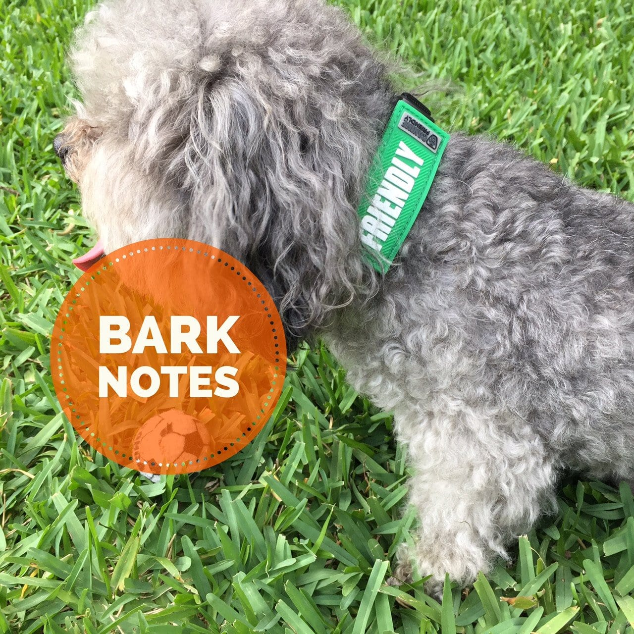 Bark Notes - Collar Accessories That Speak For Your Dog.