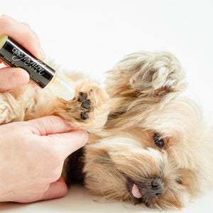 Pamper Your Little Dog's Paws.