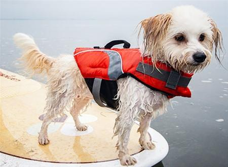 Dog Purses to Dog Life Jackets - Ten Spring Essentials for Adventures with Your Small Dog.