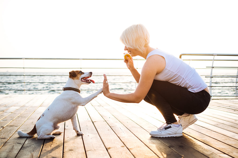 10 New Year Goals for Small Dog Owners.