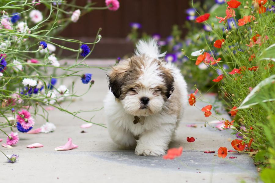 Is Your Garden Dog Friendly?