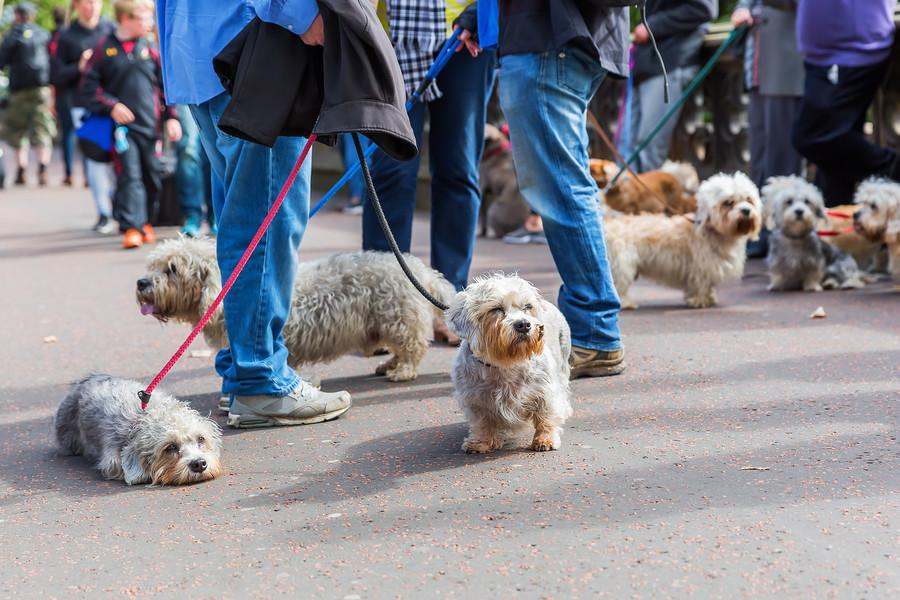 A Small Dog Meetup Could Be Your Ticket To More Little Dog Fun