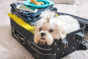 Plan Your Hurricane Getaway: Pet-Friendly Hotels
