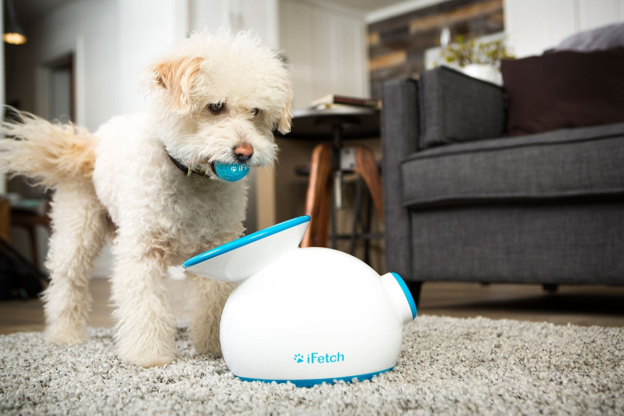 iFetch - The Ultimate Automatic Ball Launcher For Little Dogs.