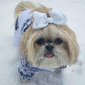 sparkles the diva shih tzu