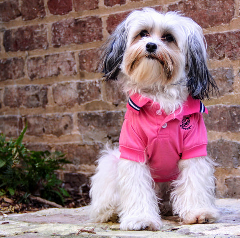 Pink Polo Shirt for Dogs