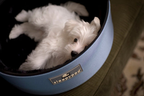 Sleepypod Mobile Pet Bed and Carrier - dog using it as a bed